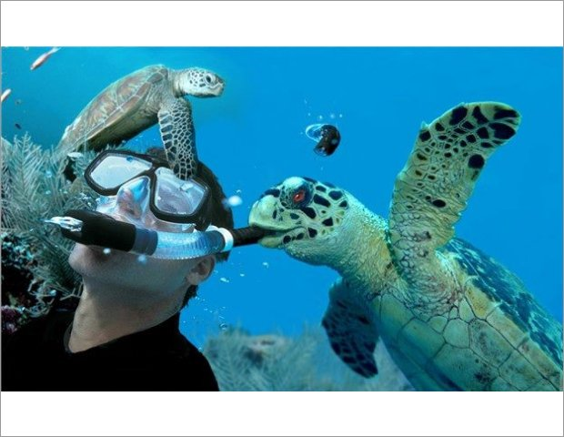 Come to dive with us and see the turtle Caretta Caretta